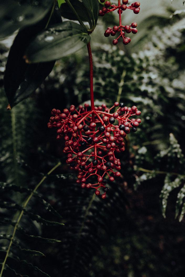 Botanischer Garten, Pflanze, Exotisch, Rot, Grün, Tropen, München